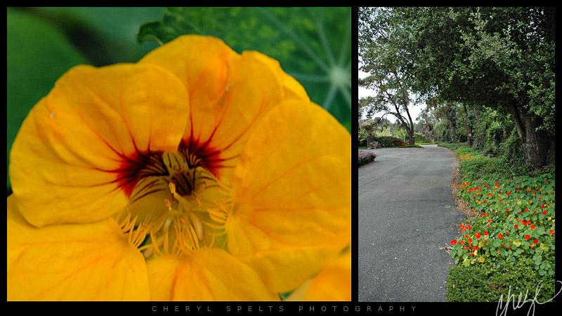 My Driveway - May 8, 2006