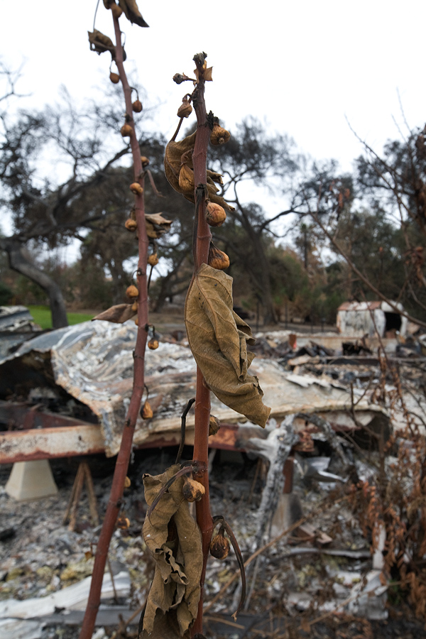 Aftermath of the Rice Fire, Fallbrook, California.