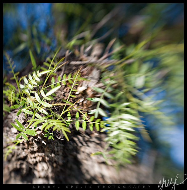 LensBaby // Photo: Cheryl Spelts