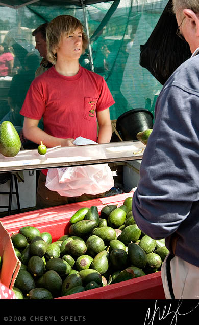 Fresh Local Avocados // Photo: Cheryl Spelts