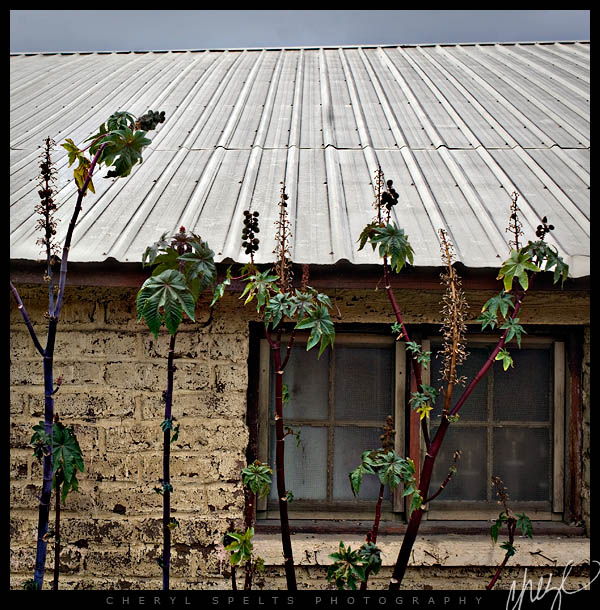 Tin Roof on an Adobe House // Photo: Cheryl Spelts