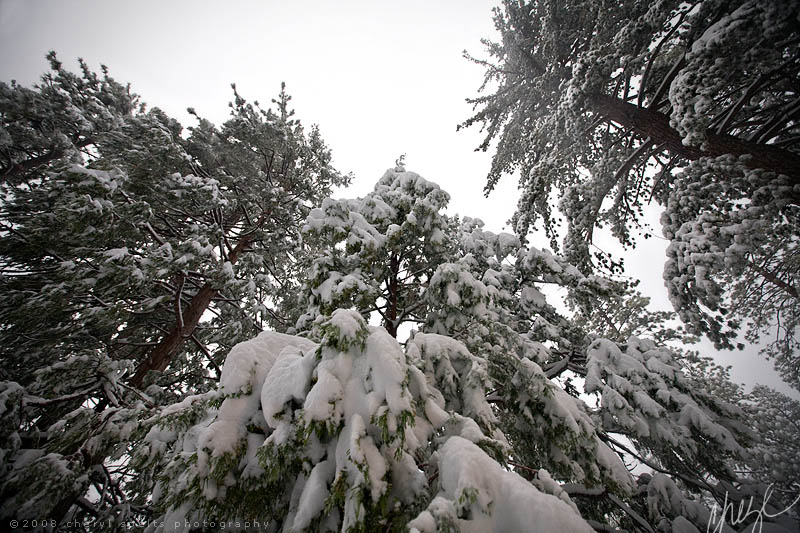 Snowy Trees in Idyllwild // Photo: Cheryl Spelts