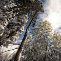 Snow and Sunshine in Idyllwild