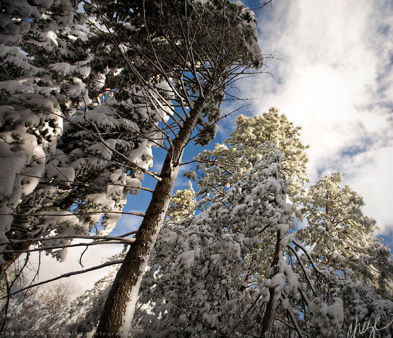 Snow and Sunshine in Idyllwild // Photo: Cheryl Spelts