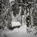 Idyllwild Snow