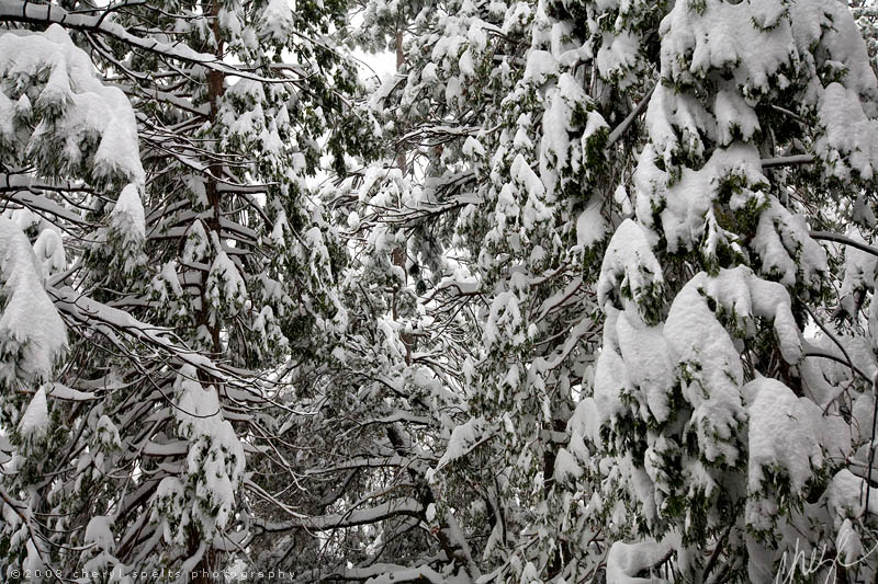 Snow in Idyllwild // Photo: Cheryl Spelts