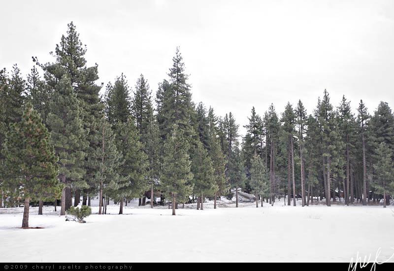 Snow in Idyllwild // Photo: Cheryl Spelts