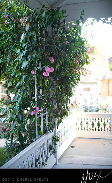 Bougainvillea // Photo: Cheryl Spelts