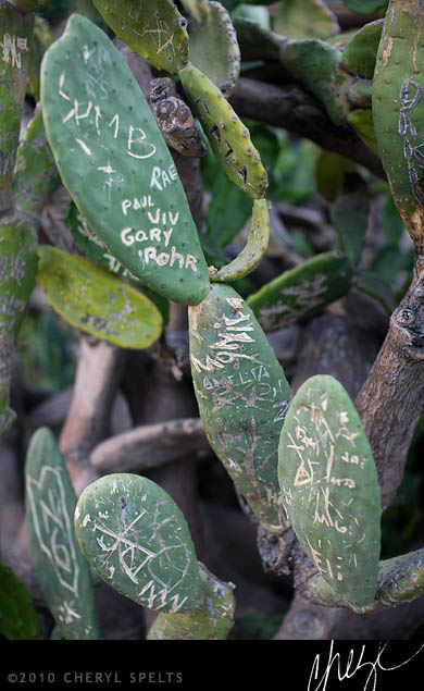 Graffiti Cactus // Photo: Cheryl Spelts