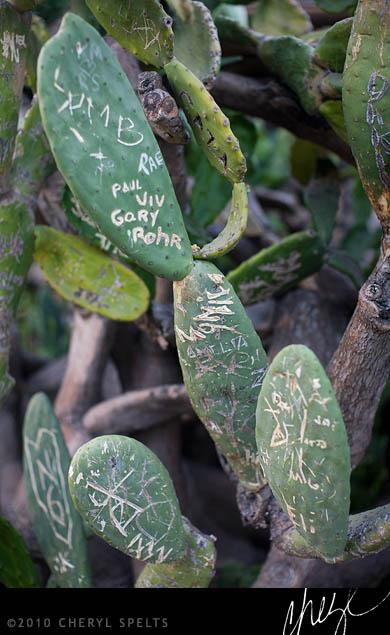 Graffiti Cactus // Photo: Cheryl Spelts