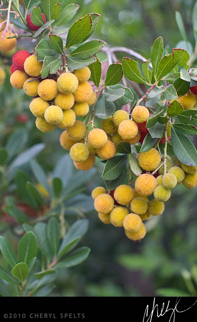 Yellow Berries // Photo: Cheryl Spelts