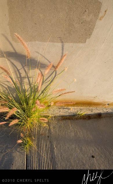 Weeds Growing in Sidewalk