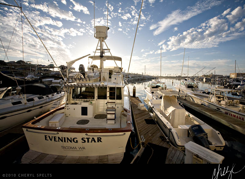 Evening Star // Photo: Cheryl Spelts