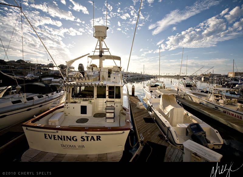 Evening Star // Photo: Cheryl Spelts