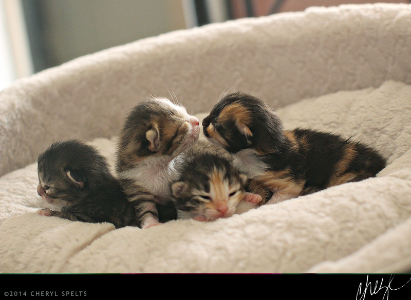 ten-day-old kittens