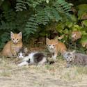 Wild Kittens