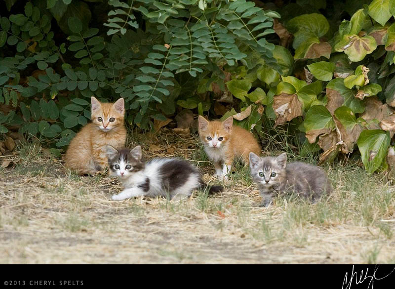 Wild Kittens // Photo: Cheryl Spelts