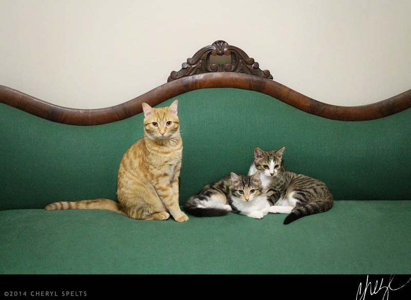Regal Cats // Photo: Cheryl Spelts