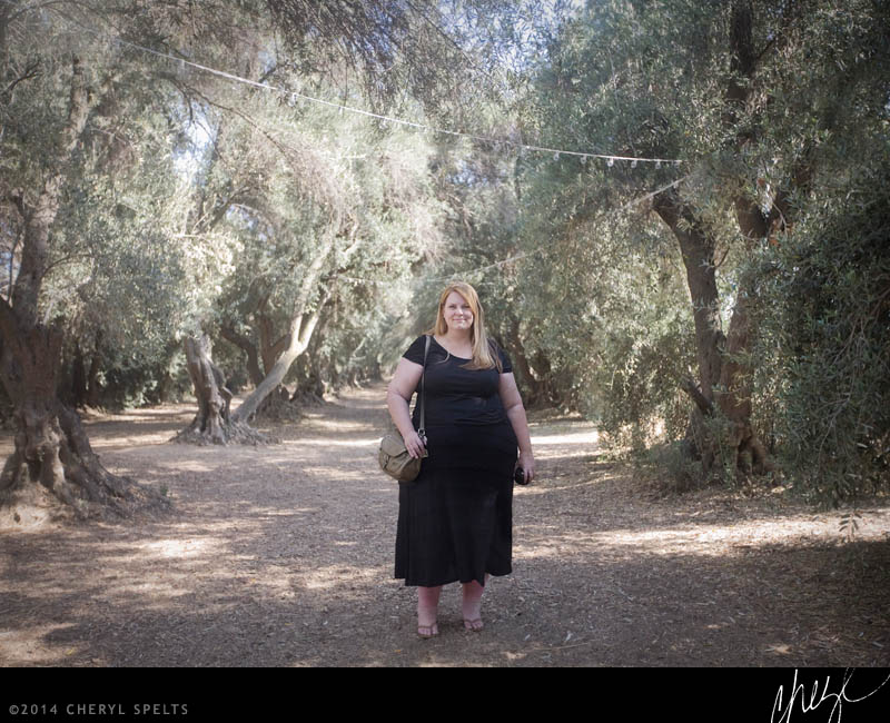 Among the Olive Trees