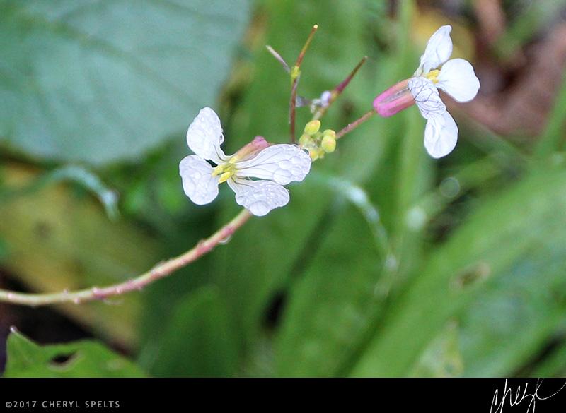 Raindrops on Wildflowers